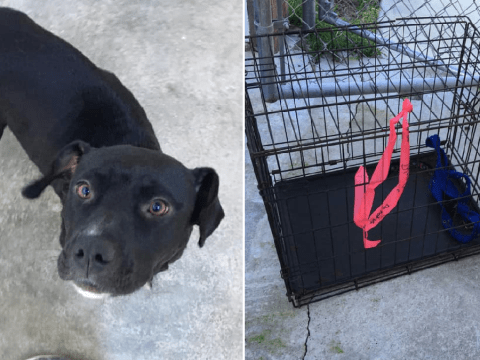 Abandoned mother dog found on road desperately trying to pull caged puppies to safety
