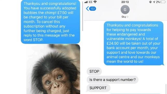 Texts about Bubbles the Chimp