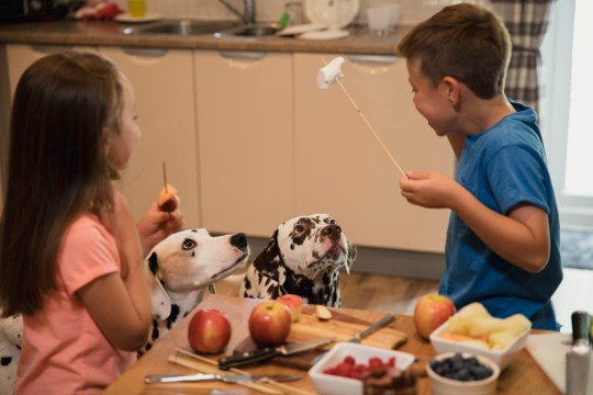 Children play with fruit kebabs and Nutella chocolate spread in front of two Dalmatian pet dogs