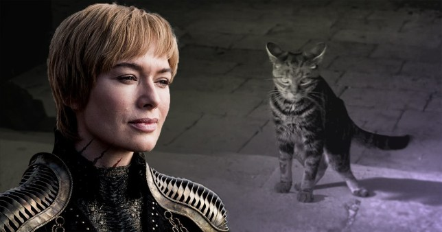 Game of Thrones Ser Pounce Cersei Lannister Lena Headey