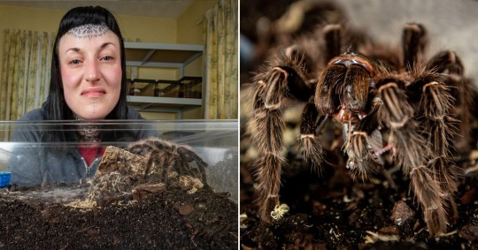 former arachnophobe sleeps with tarantulas