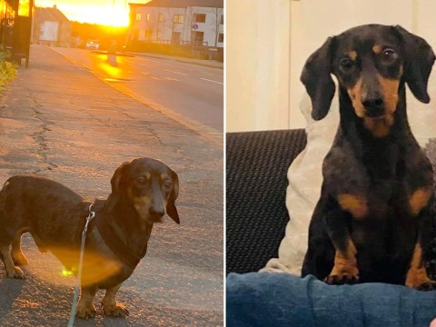 Sausage dog sneaks onto bus alone and takes 18-mile trip to seaside