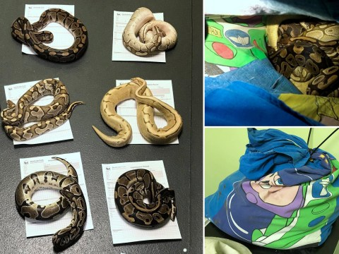 Two pillowcases full of snakes dumped behind bins outside fire station