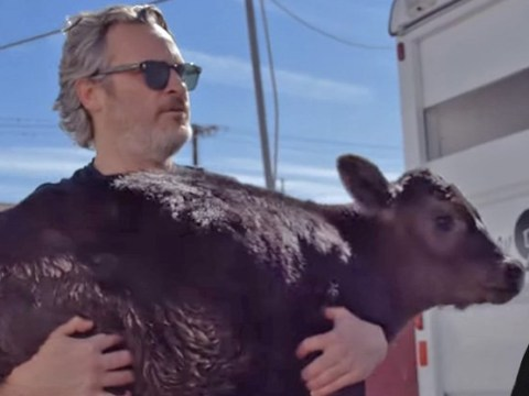 Joaquin Phoenix rescues cow and calf from slaughterhouse after Oscars animal-cruelty speech