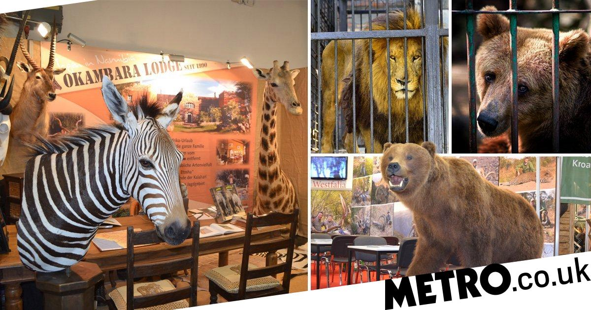 Last chance to vote for trophy hunting ban to save 2,000 protected animals
