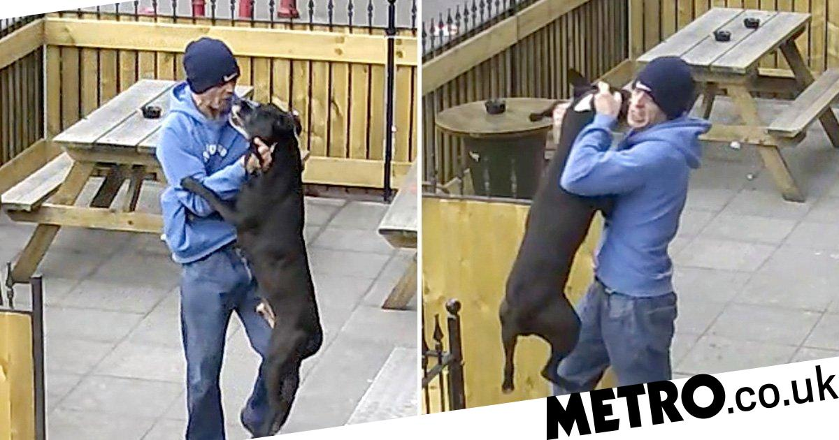 Find scumbag filmed repeatedly punching dog in the face