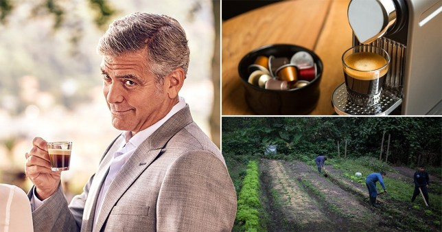 Actor George Clooney, a brand ambassador for Nespresso, said he was 'saddened' by the results of a Channel 4 investigation