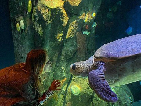 The Big Bang Theory's Kaley Cuoco confronted by giant turtle on set of The Flight Attendant