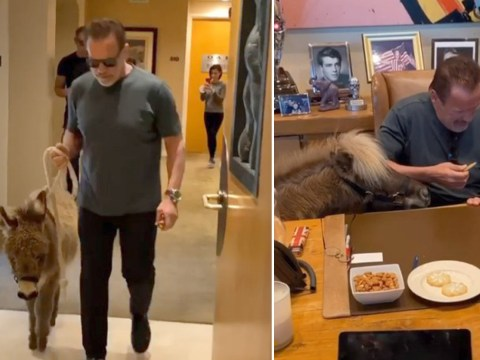 We need to talk about Arnold Schwarzenegger taking his donkey to work