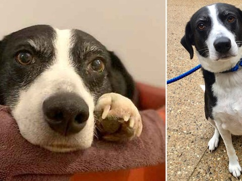 Dog is inundated with adoption applications from all over the world after spending 10 years hoping for a home