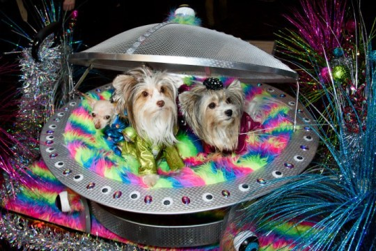 Two dogs sitting in a makeshift spaceship