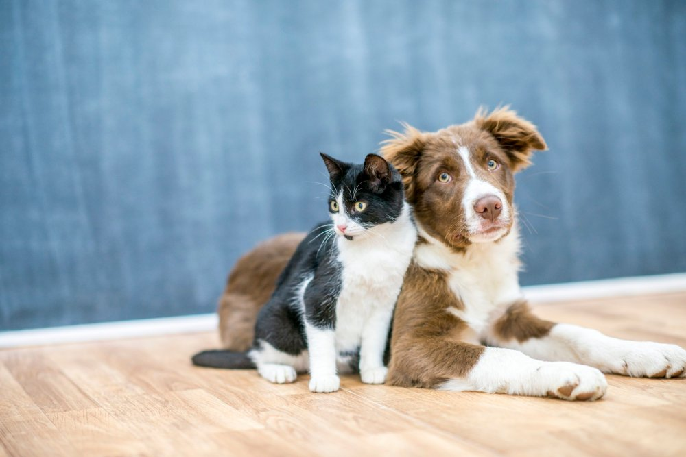 A cute cat and dog are sitting together on a floor.