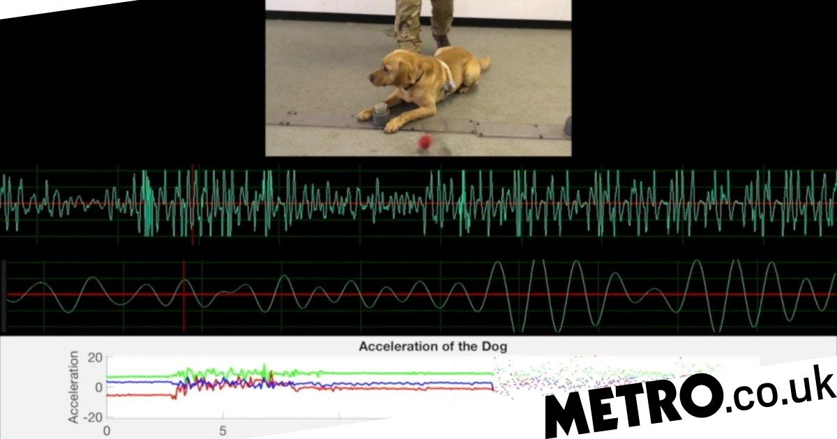 'Fitbit for pets' tracks heart rate and breathing of man's best friend