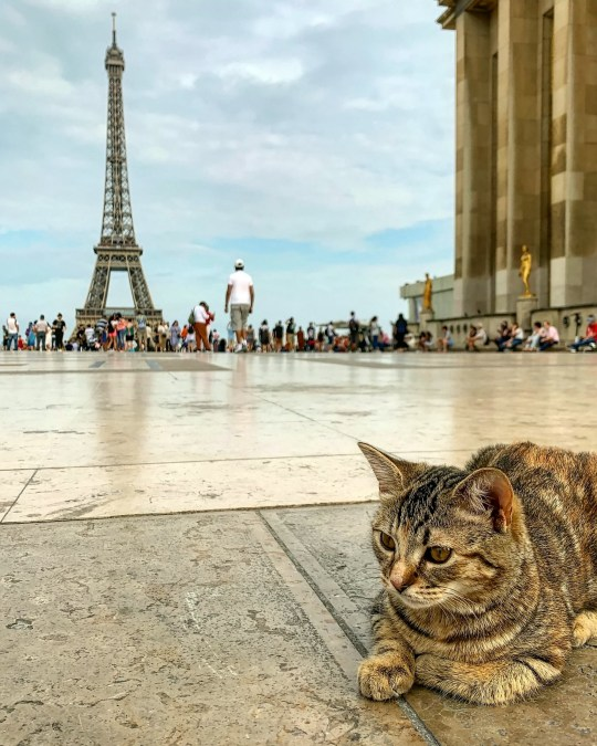 Cat Spends Her Days Travelling Around Europe With A Parrot