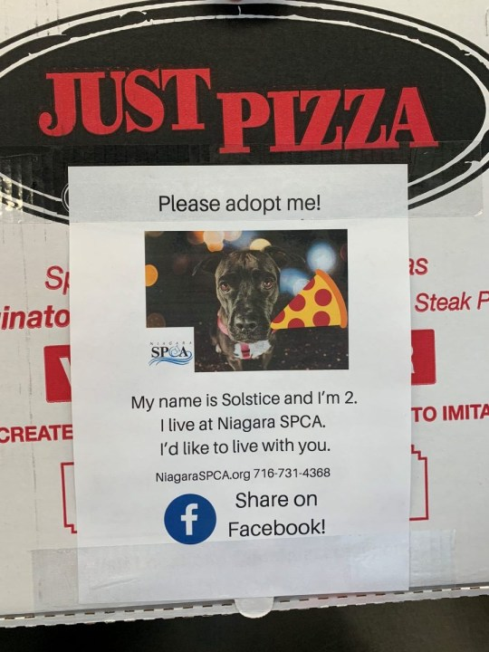 Flyer of dog needing to be adopted on pizza box