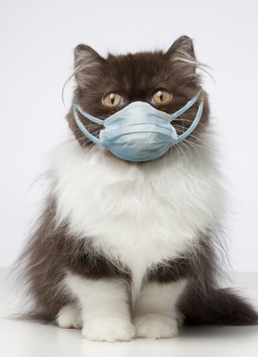 Cat in coronavirus mask