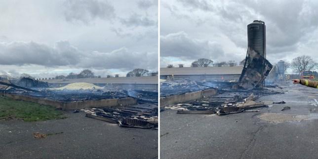 Ducklings killed in fire