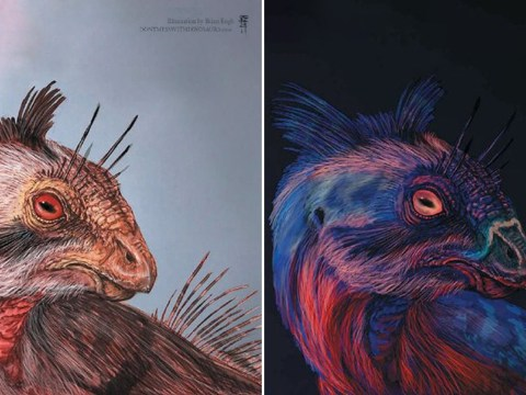 Did dinosaurs glow in the dark? Scientists suggest photoluminescent skin