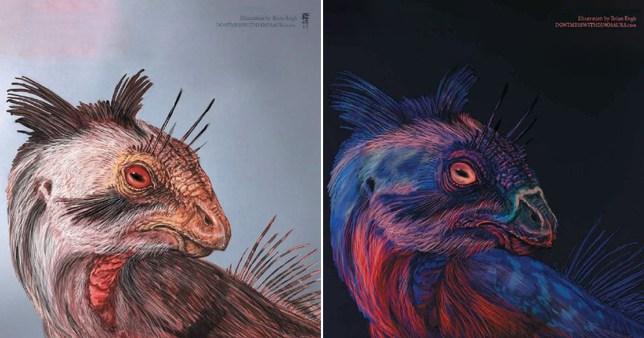 Dinosaurs might have photoluminesced like deep sea creatures do today (Photo: Brian Engh)