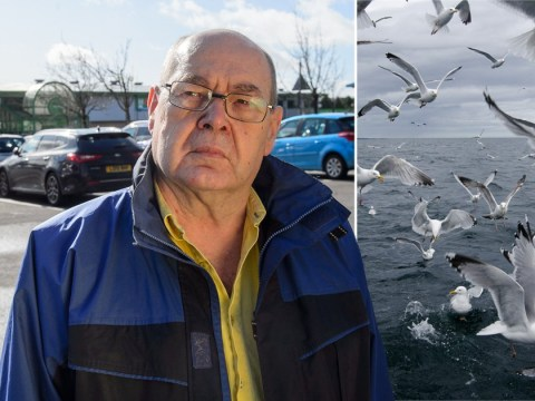 Man fined £100 'after he fed bread to a seagull'