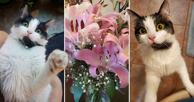 Brittany's cat Liffey was put down after consuming toxic lilies