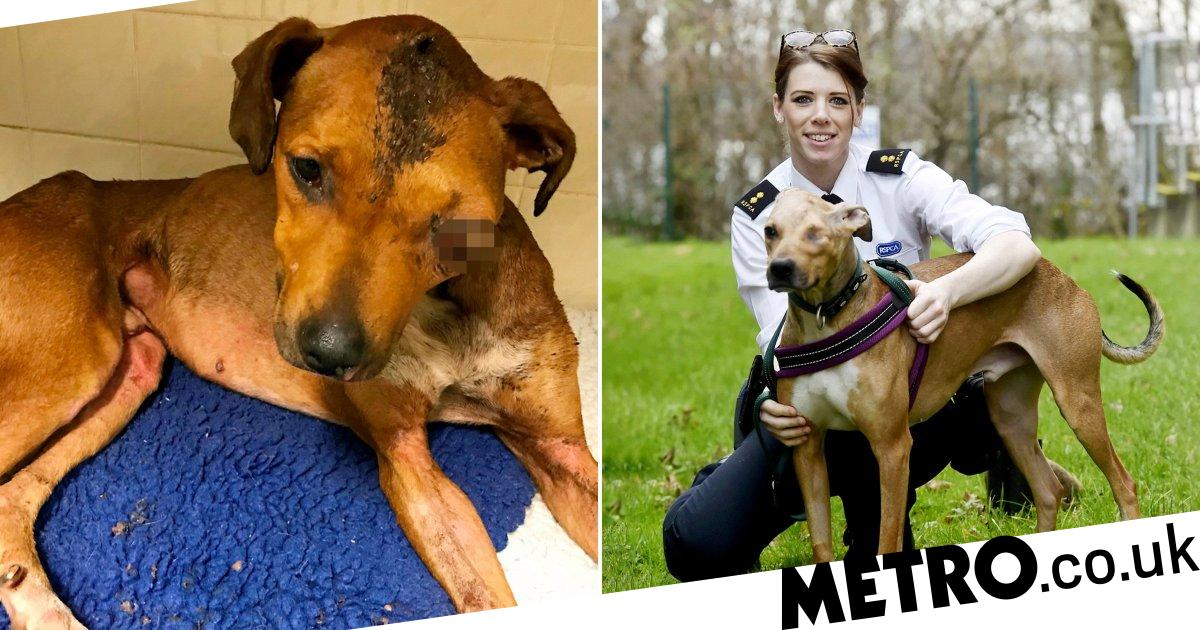Miraculous recovery of abandoned dog beaten so badly he lost an eye