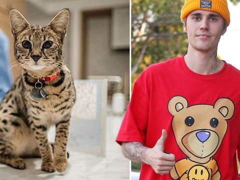 Justin Bieber's cat Sushi found after missing for weeks and he's over the moon