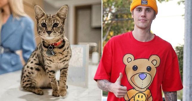 Justin Bieber and cat
