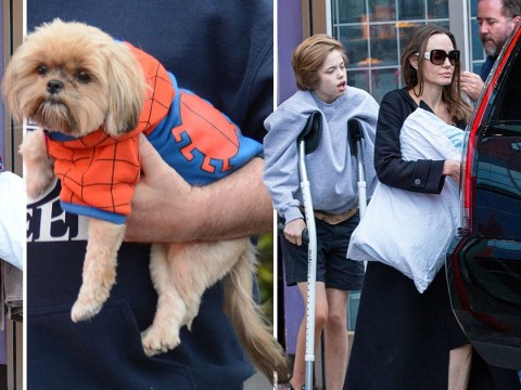 Angelina Jolie takes Shiloh and Zahara to the movies and their pup gets in the spirit in Spiderman costume