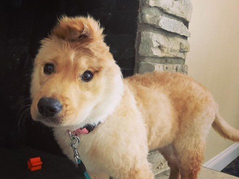 Adorable 'unicorn' dog with one ear is the light we need in these dark coronavirus times