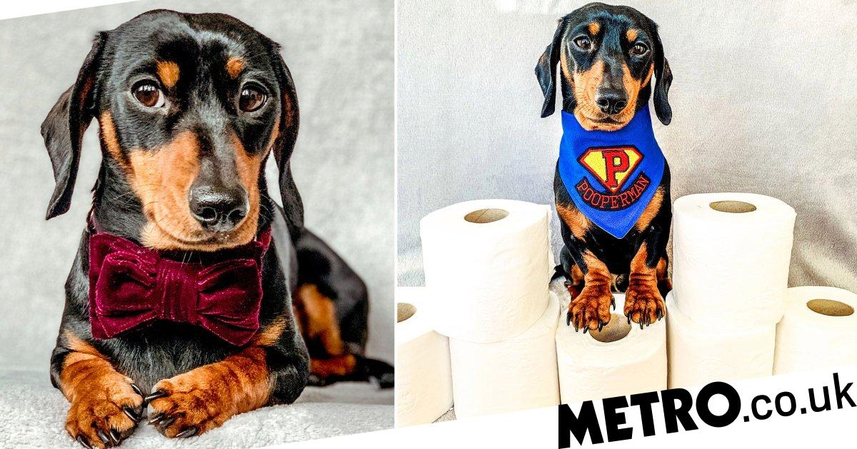 Sidney the sausage dog will fetch you toilet roll if you run out