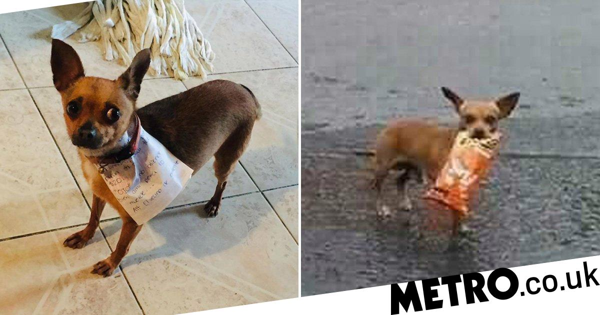 Good dog fetches bag of Cheetos from shop for his quarantined owner
