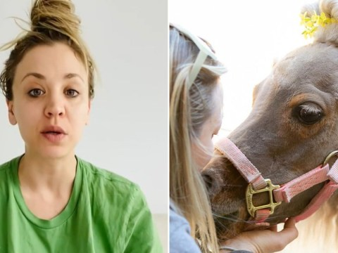 The Big Bang Theory's Kaley Cuoco mourns rescue pony Fiona: 'She no longer has to live in pain'