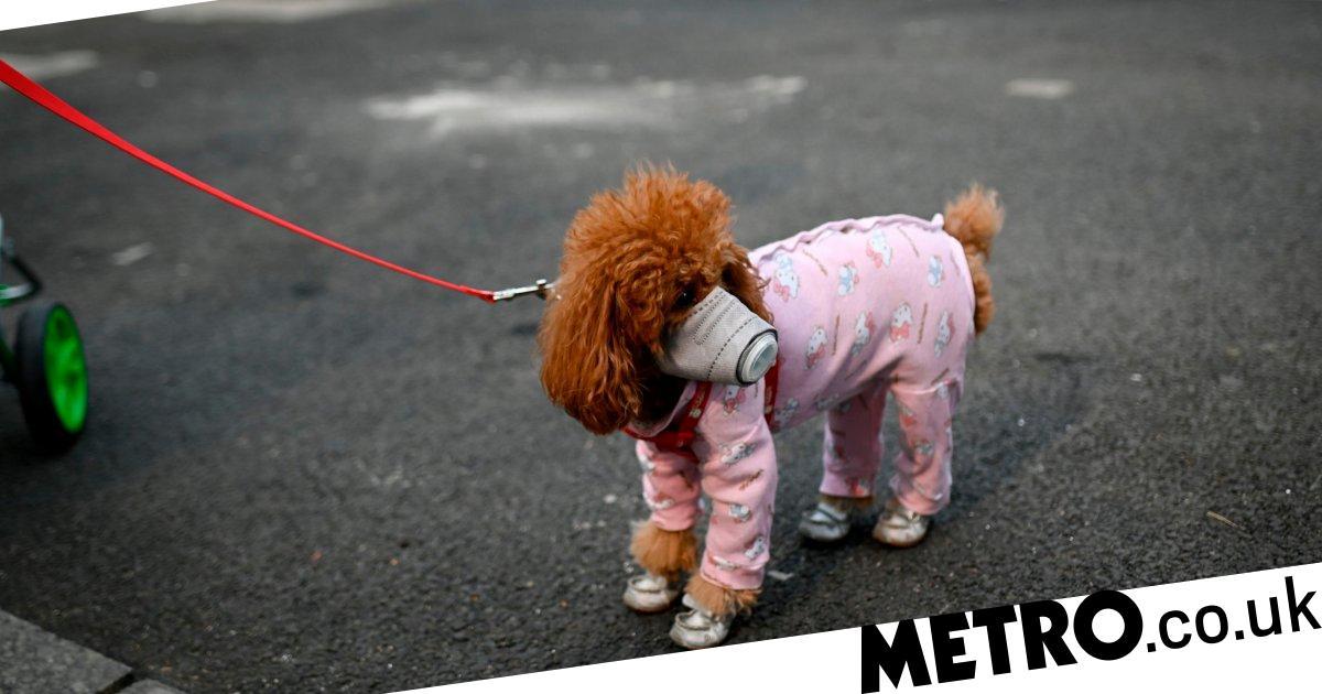 Coronavirus UK: Can you walk your dog while self isolating?