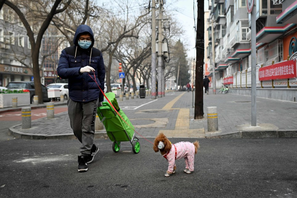 A man wearing a face mask walks his dog as he pulls a trolley after shopping in Beijing on February 13, 2020. - The number of deaths and new cases from China's COVID-19 coronavirus outbreak spiked dramatically on February 13 after authorities changed the way they count infections in a move that will likely fuel speculation that the severity of the outbreak has been under-reported. (Photo by STR / AFP) (Photo by STR/AFP via Getty Images)