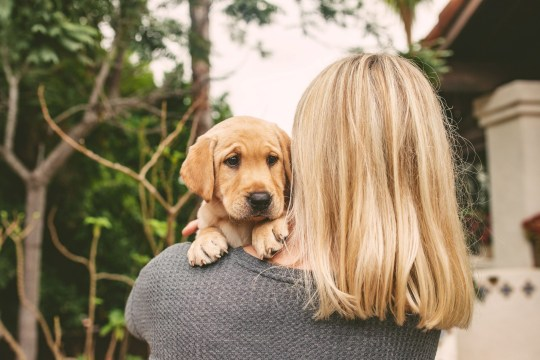 Alicia Tschirhart's with her new cloned dog Ziggy. See SWNS story SWNYziggy. A family paid a whopping $50,000 to CLONE their heroic dog who saved its pregnant owner from a rattlesnake. David and Alicia Tschirhart decided to genetically duplicate their beloved Labrador retriever Marley after the pooch passed away just months after saving Alicia from a venomous snake. The couple preserved Marley?s DNA but waited five years to clone the hound as they wanted their children Madeleine, five, and Colette, three, to be old enough to appreciate a dog. The family, of San Diego, California, welcomed Ziggy, now four months, in December, and were astonished by how similar the canine was to the original Marley.