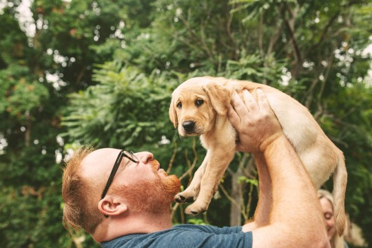 David Tschirhart's with his new cloned dog Ziggy. See SWNS story SWNYziggy. A family paid a whopping $50,000 to CLONE their heroic dog who saved its pregnant owner from a rattlesnake. David and Alicia Tschirhart decided to genetically duplicate their beloved Labrador retriever Marley after the pooch passed away just months after saving Alicia from a venomous snake. The couple preserved Marley?s DNA but waited five years to clone the hound as they wanted their children Madeleine, five, and Colette, three, to be old enough to appreciate a dog. The family, of San Diego, California, welcomed Ziggy, now four months, in December, and were astonished by how similar the canine was to the original Marley.