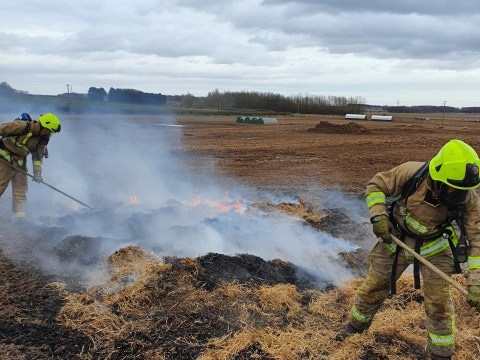 Pig starts massive fire on farm with its own poop