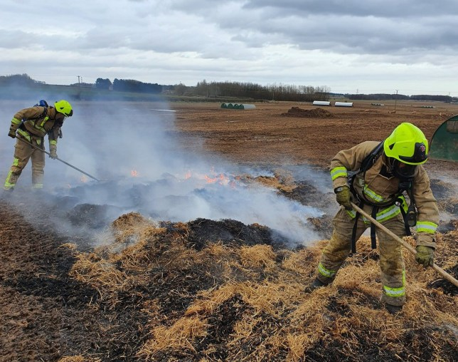 A peckish pig which ate a pedometer sparked a fire near Leeds. (Picture: Russell Jenkinson/North Yorkshire Fire and Rescue Service)
