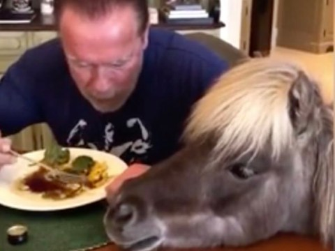 Arnold Schwarzenegger self-isolates with horse and donkey and feeds them from his own plate
