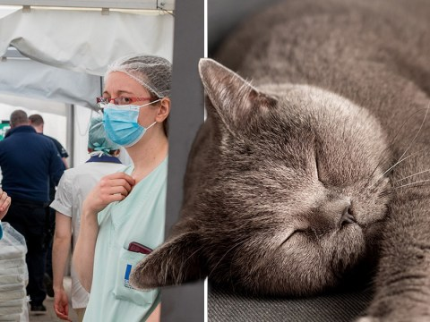 Woman infects cat with coronavirus in third known human-to-animal transmission