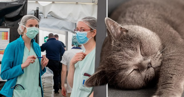 Woman infects cat with coronavirus