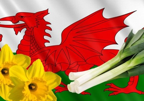 How to say 'Happy St David's Day' in Welsh
