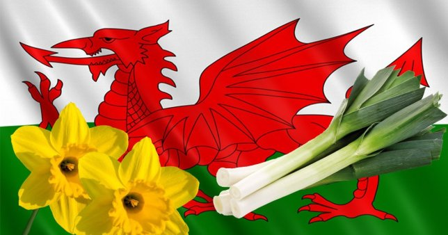 Welsh flag with daffodils