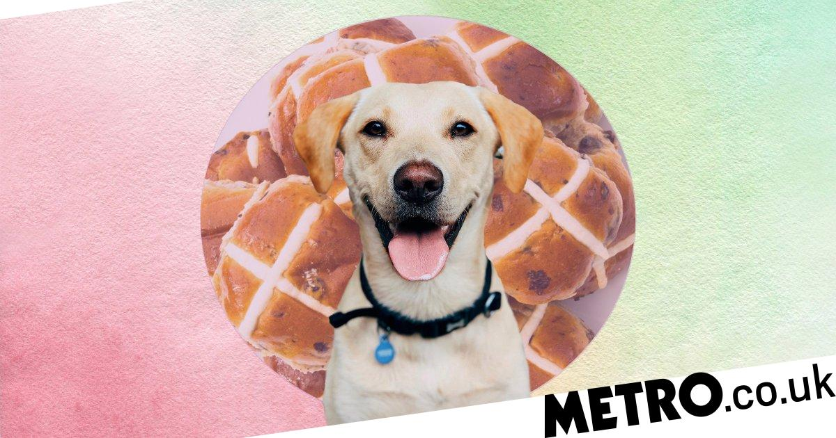Hot cross buns are toxic for dogs so don't give in to their puppy eyes