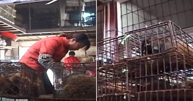 Upsetting footage filmed in Thailand and Indonesia in early April showed that despite the Covid-19 pandemic 'wet markets' are still operating