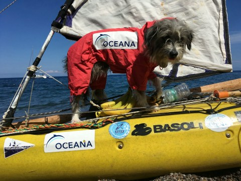 Kayaker rescues street dog while travelling through Italy and brings her aboard to sail the world