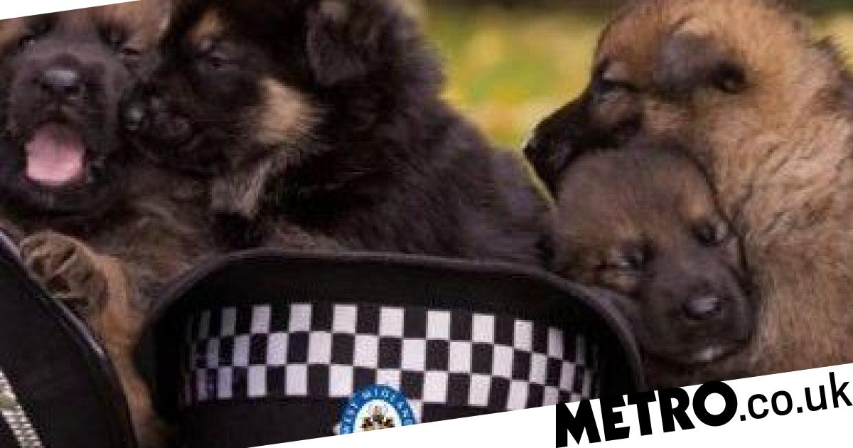Police want your help naming new puppies after NHS heroes