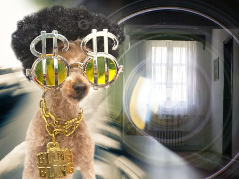 Channel 4 to attach Go-Pros to celebrity pooches for genius lockdown TV show Snoop Dogs