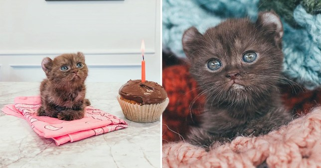 Kitten with a cupcake
